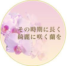 その時期に長く綺麗に咲く胡蝶蘭(洋蘭)を