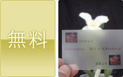 胡蝶蘭(洋蘭)メッセージカード