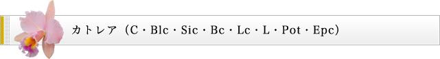 カトレア(C・Blc・Sic・Bc・Lc・L・Pot・Epc)