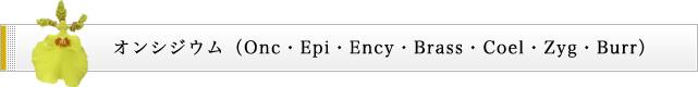 オンシジウム(Onc・Epi・Ency・Brass・Coel・Zyg・Burr)